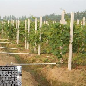 葡萄架水泥立柱
