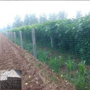果树水泥立柱围栏