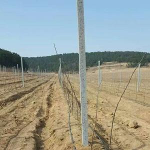 果树水泥立柱