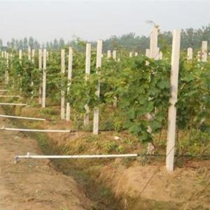 葡萄架水泥柱