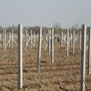 瓜蒌水泥柱子